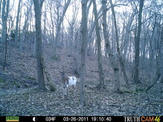 Day time half white buck 009
