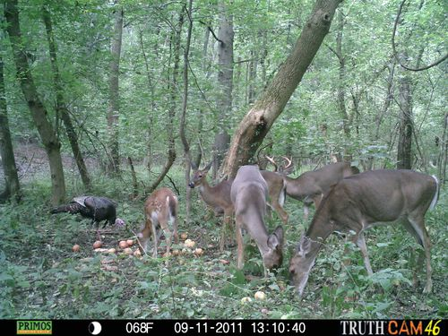 Deer Hunting Drawings 9-11 Deer And Turkeys 010