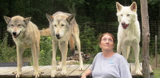 Dawn and 3 wolves