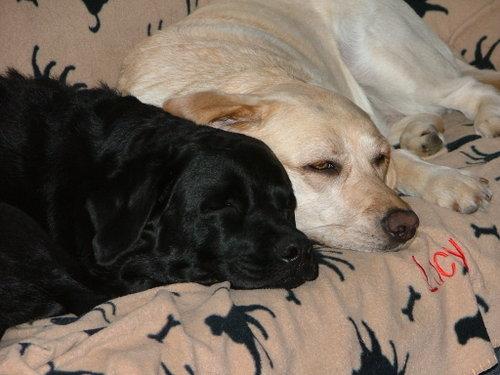 Best Dog Flea Medicine Ingrediant
