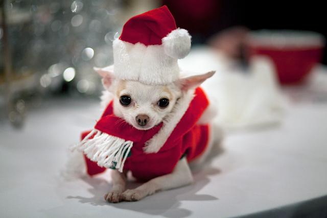 Cute-Christmas-Animals-55