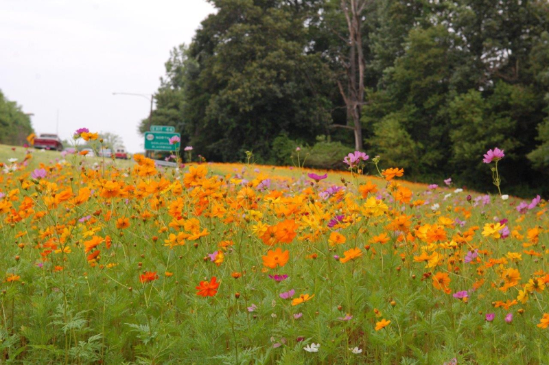 SJTA Wildflowers2