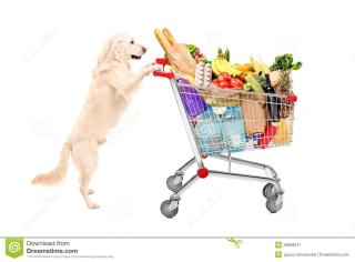 Funny-retriever-dog-pushing-shopping-cart-full-food-product-29609017