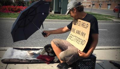Homeless-pets-940x540
