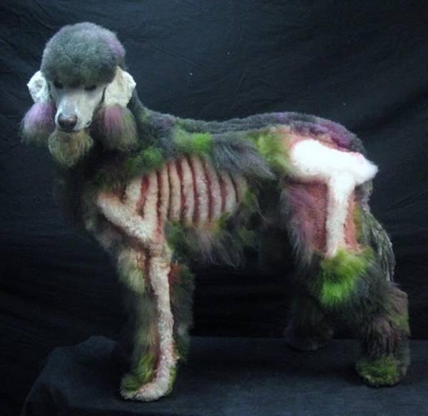 Zombie-poodle