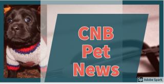 Petnews 1
