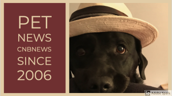 Pet News 2