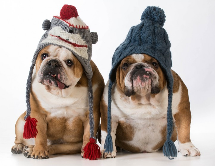 Bigstock-two-dogs-dressed-for-winter-76165919-722x560