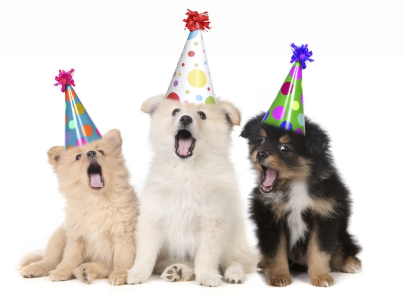 Funny-Animal-Puppies-With-Birthday-Hats