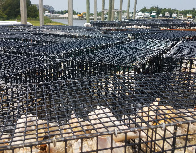 Photo1-cages-July-19-cropped