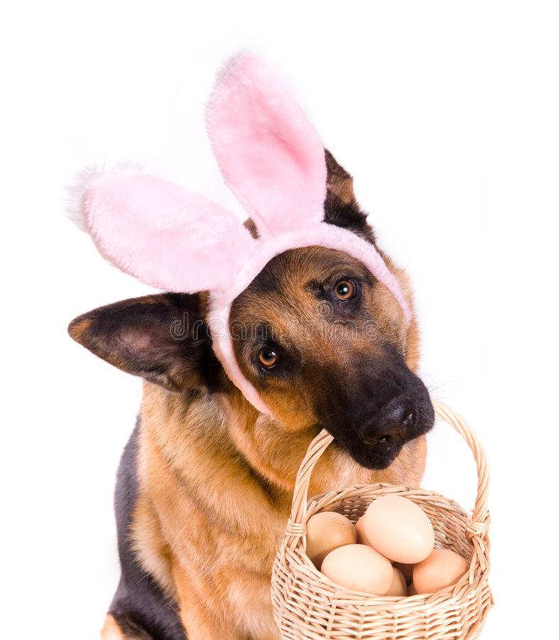 Funny-easter-dog-basket-4114887