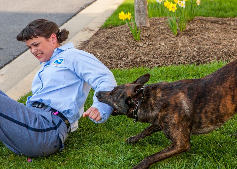 Postal-worker-dog-attack