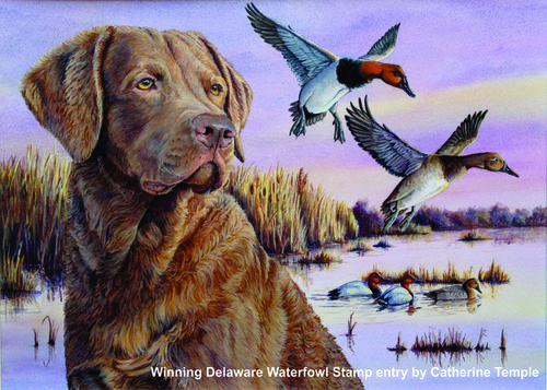 2017-Delaware-waterfowl-stamp-contest-winner
